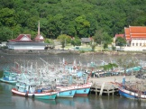 many boats