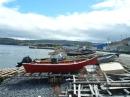 dories (bay of islands)